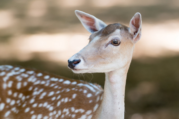 6. A local spotted deer. Is it just me, or is he sporting a toupée?
