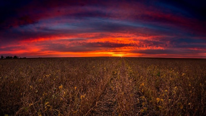 3. This absolutely stunning sunrise sends a burst of color over a field in rural Iowa.