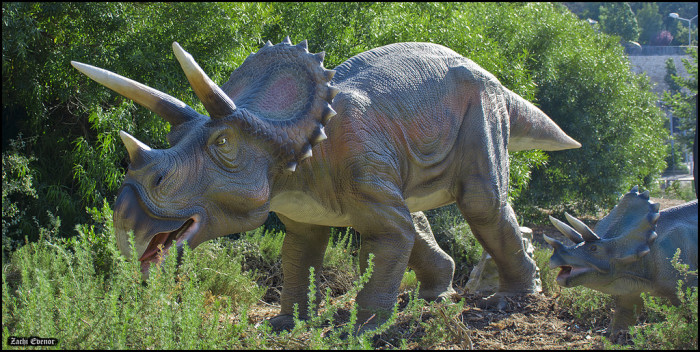 6. If they talk about Triceratops being their official state dinosaur.