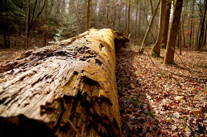 2) Cherokee Park - Tellico Plains