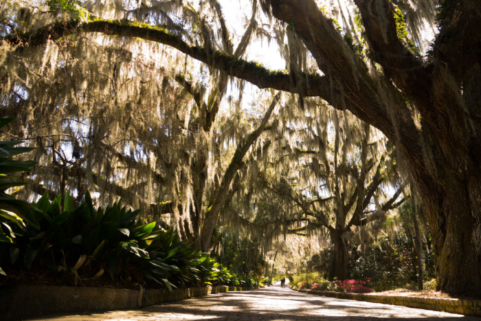 2. Alfred B. Maclay Gardens State Park in Tallahassee is the perfect setting for a stroll, swim, or an afternoon picnic.