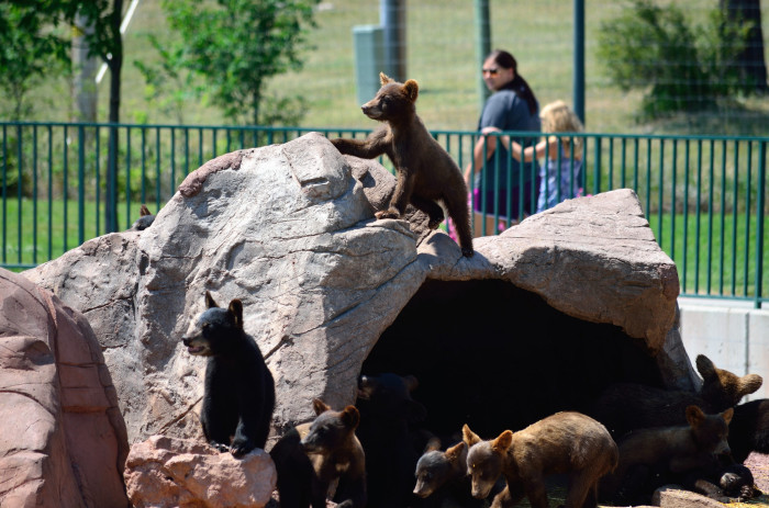 8. Baby Bears