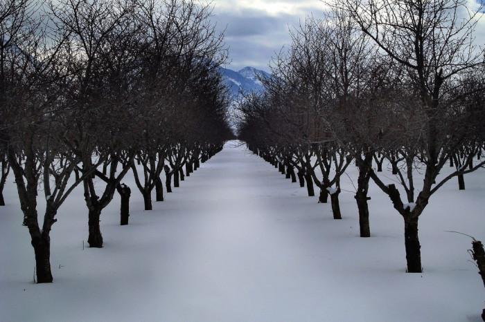 18. A winter orchard walk...