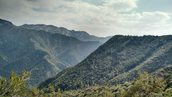 9. A landscape of lush, pine-covered mountains...