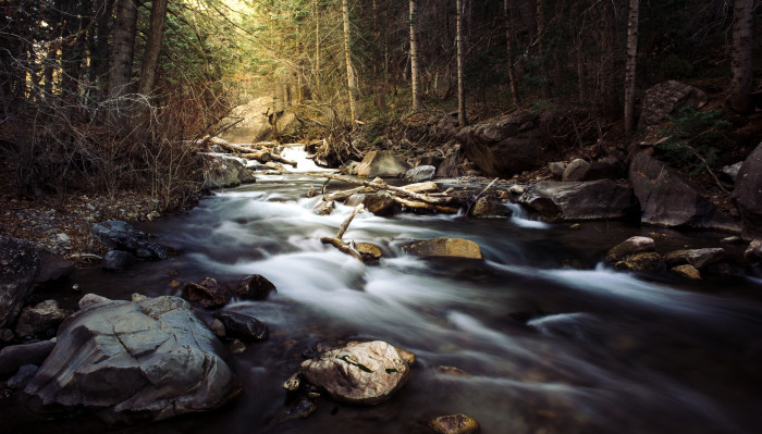 17. A shady stream...