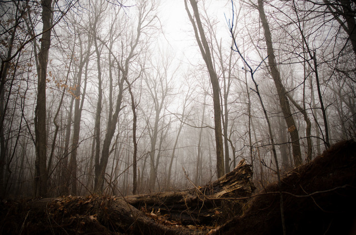 16. A spooky fog sifts through a gnarled and tangled forest grove in Worcester.