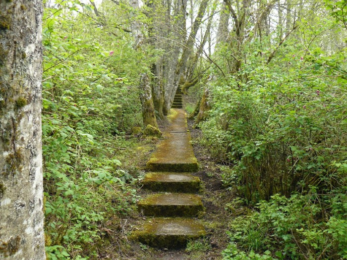 2. These steps were captured at an abandoned missile site on Cougar Mountain.