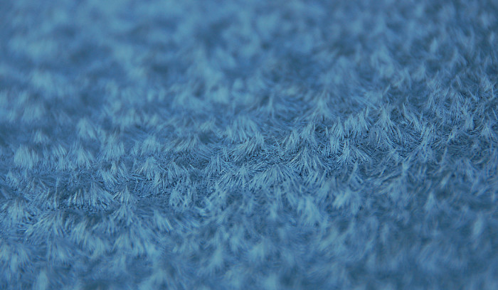 8.  Hairy Frost