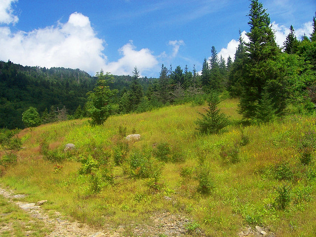 6. Camp Alice Trail