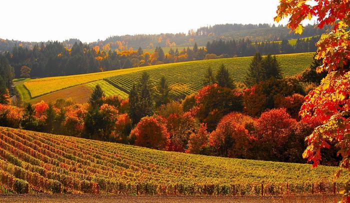 2. Visit Vineyards in the Willamette Valley.