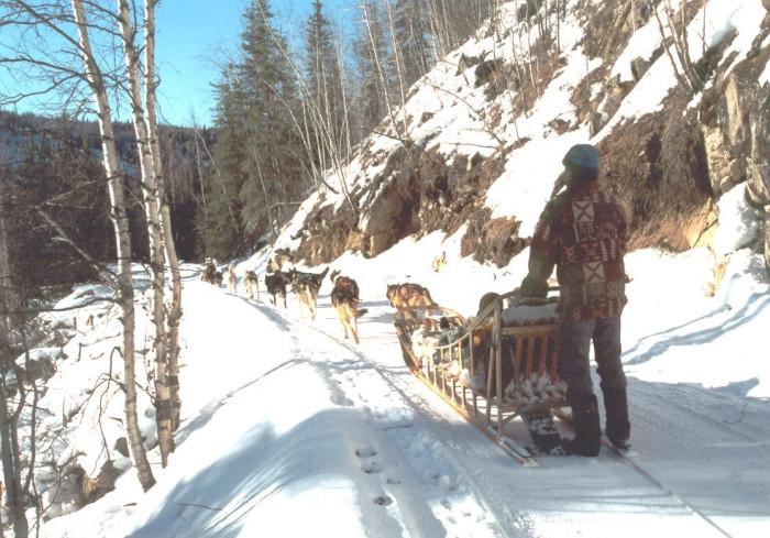 2dog+sled+ride+2