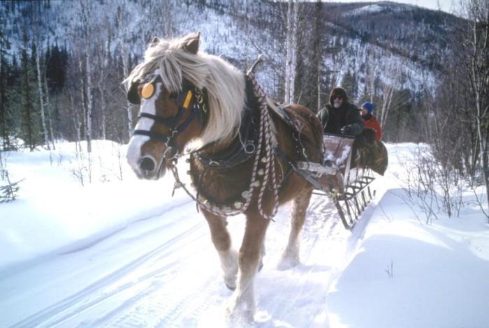 2horse+drawn+sleigh