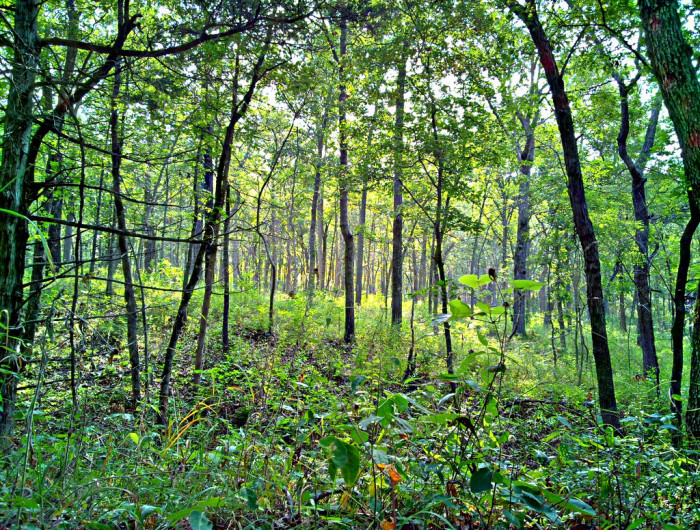 3.	This could be the Enchanted Forest.