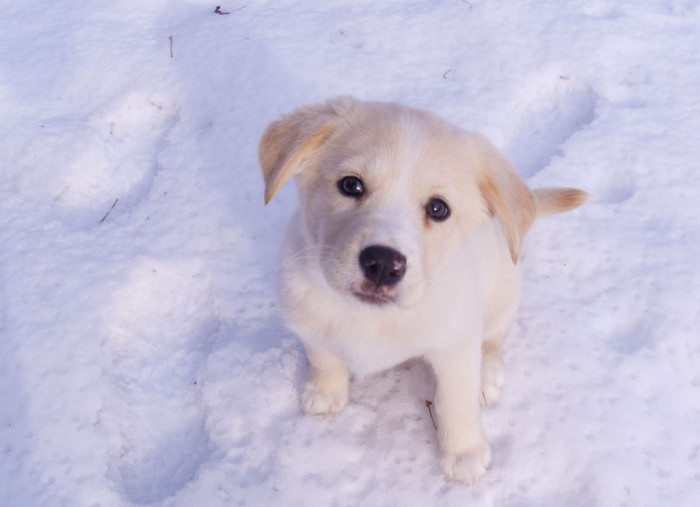 11.  Train your dog to use ONLY one section of the yard to do his business in the winter.