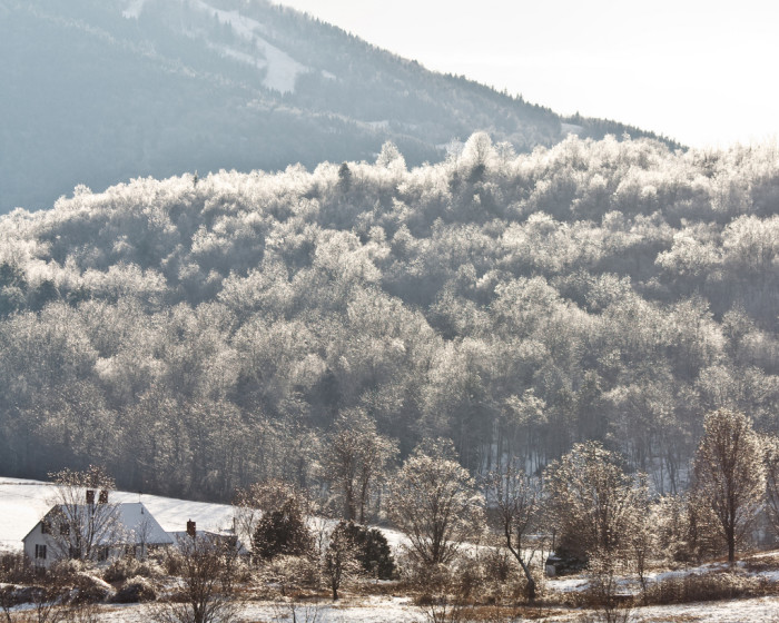1.  Sun through Icy Trees
