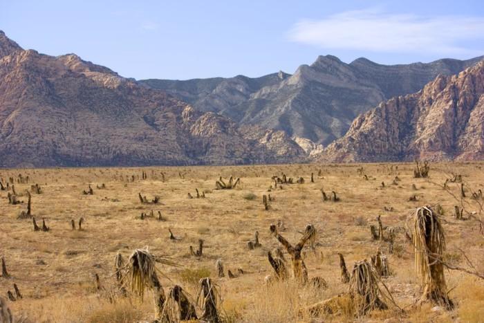 2. Desert