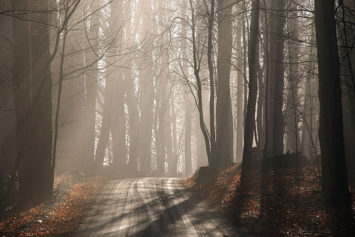 22.  A misty morning on a dirt road.