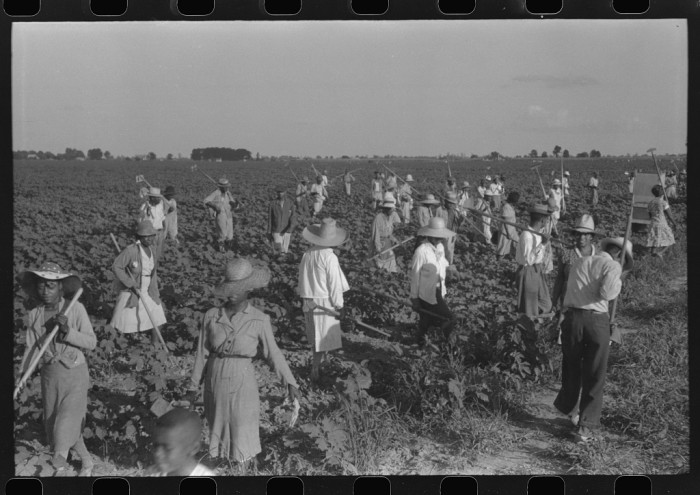 3. Taken in August of 1940, this photo depicts a standard day on the Hopson Plantation near Clarksdale.