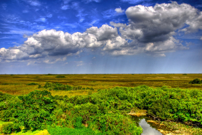 5. Everglades National Park encompasses much of the rare wildlife, sprawling landscapes and unique beauty that make Florida special.
