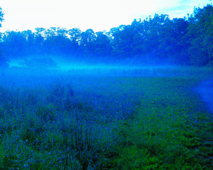 6. This meadow in Northampton glows with magical blue light.