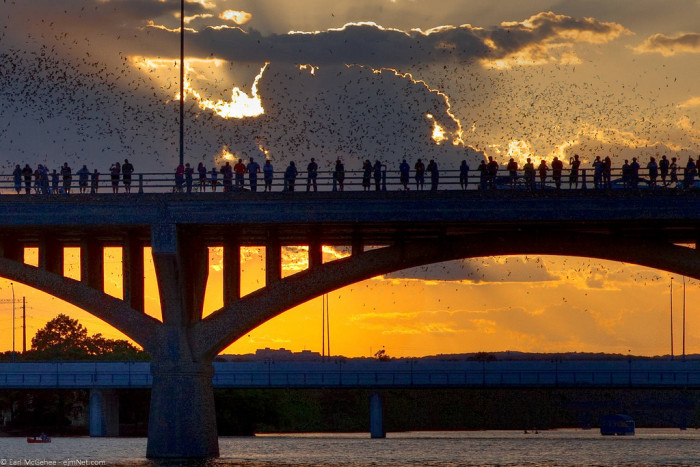 7. Visit the Congress Ave bridge at dusk in the summer and watch as millions of bats emerge from underneath to begin their migration to Mexico