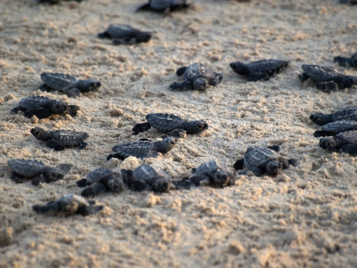 3. Witness the sea turtle hatching on Padre Island (THE CUTENESS!!)