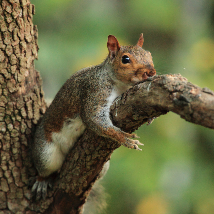 10) I dare you to try to be more laid back than this gray squirrel. This cheeky little creature was spotted in Bethesda.