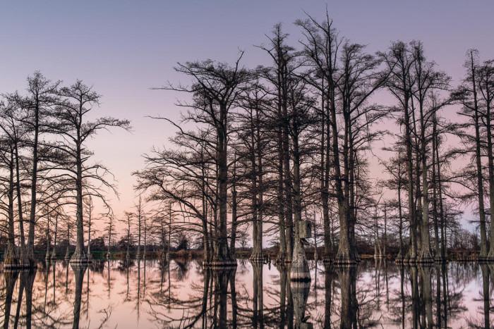 4. A Dublin Cypress Swamp
