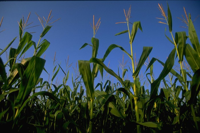 4.	Your school borders a corn (or some other crop) field on at least one side.