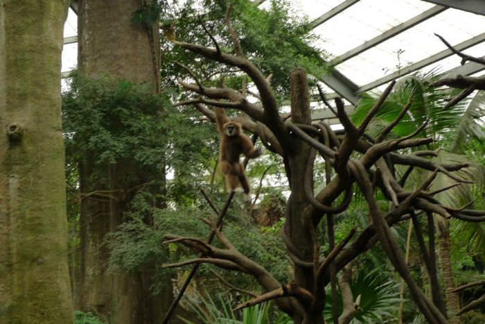 4. And even the world's largest indoor rain forest: The Lied Jungle at Henry Doorly Zoo in Omaha.
