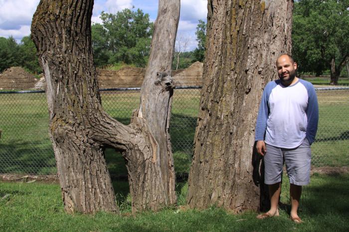 "3. The ""Hi"" Tree, Omaha"