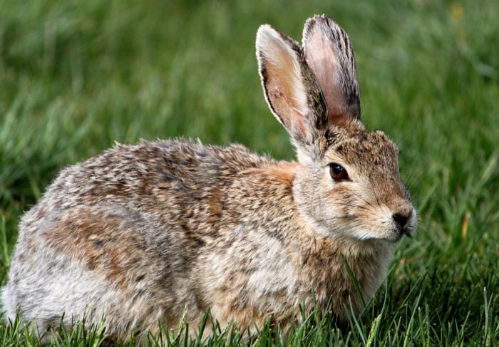 8. It's illegal to take a picture of a rabbit from January to April without an official permit.
