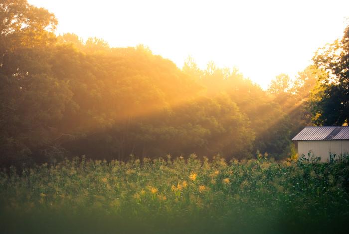 6. Fresh Air