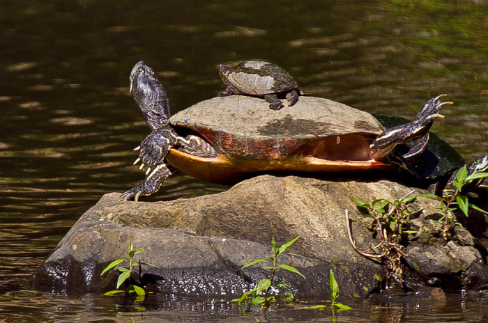 5) This mama and her baby were caught being fabulous at Great Falls Park.