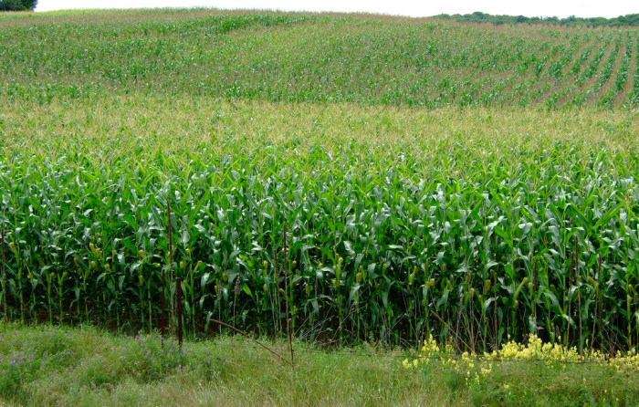 8. There's nothing but cornfields in North Dakota.