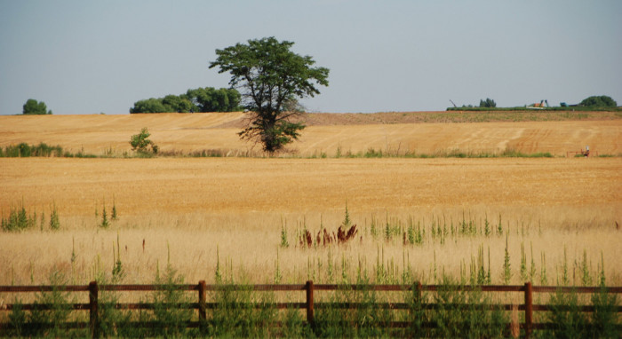 "9. ""Lafayette, Colorado. The July heat has yellowed the fields."""