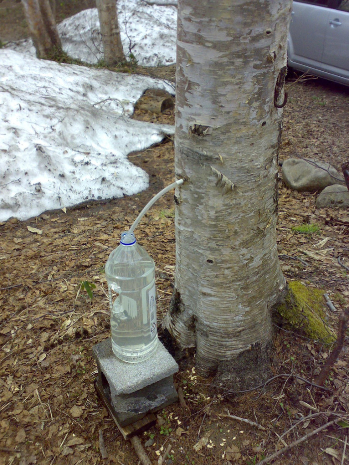 1.  Unless you know what you're doing, don't start your own mini maple sugaring operation....