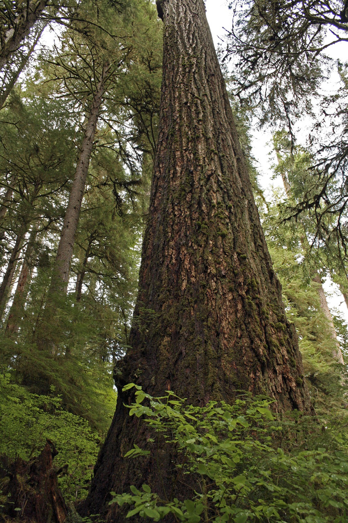 8. Walk among ancient trees in the Valley of the Giants.