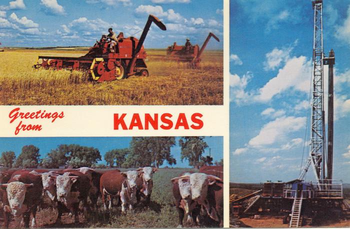 "12. ""1970s Minniola KS Handsome Herd of Range Grazing Whiteface Cattle Kansas Wheat Threshing and a little Oil too."""