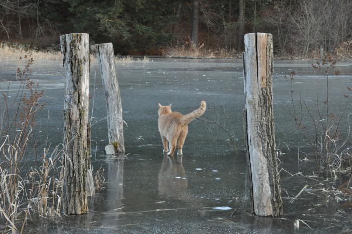 19.  Frozen Pond