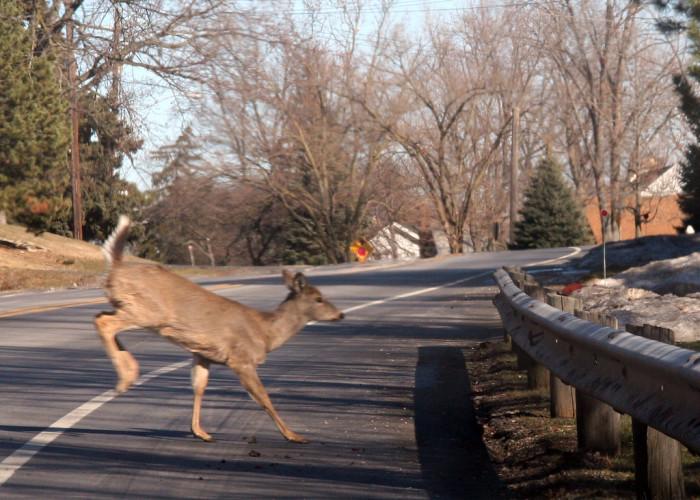 D is for dodging deer.