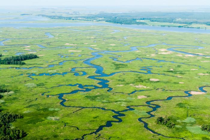 2) The Nanticoke River Wetlands are like a work of art.