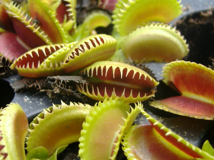 6. Carnivorous Plants in the Okefenokee Swamp