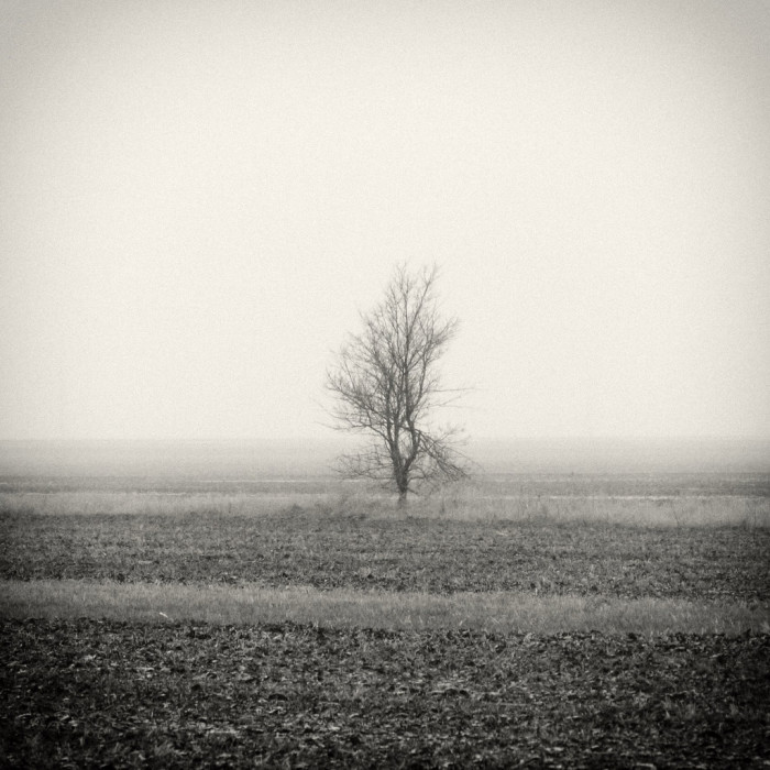 2. This creepy photo makes you wonder if anything is lurking behind the tree...