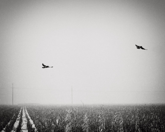 6. Two birds frozen in time over a frozen field