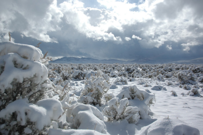 13. A field of snow and sage...