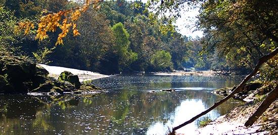 5. Leaf River