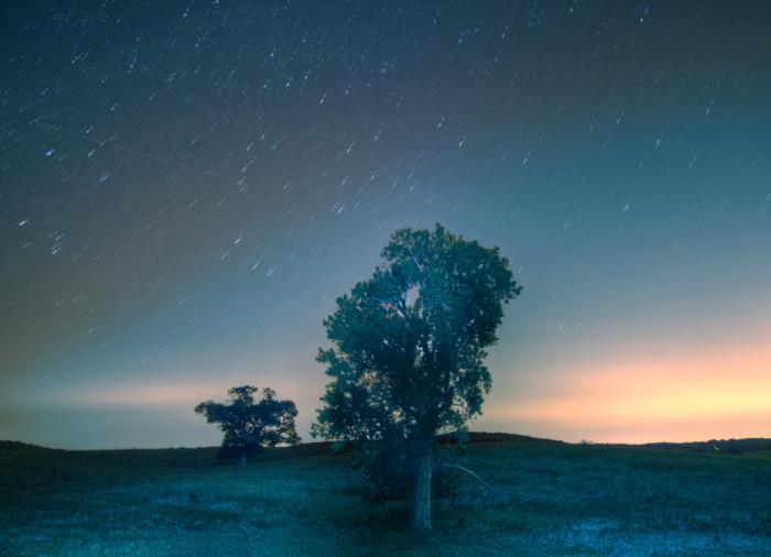 """14. """"Night tree"""""""