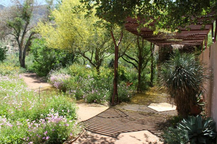 10. Superior - Boyce Thompson Arboretum