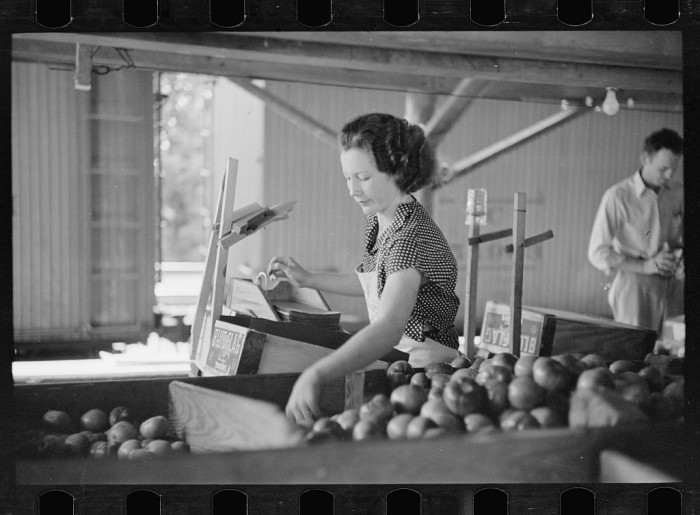 6. Taken inside the Terry factory, an employee boxes tomatoes for market.